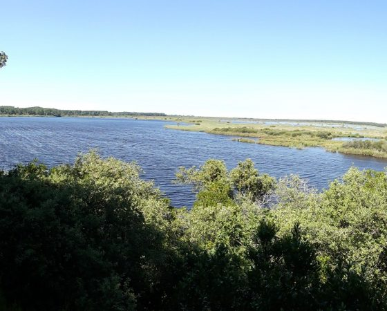 Gironde : le foncier comme arme verte